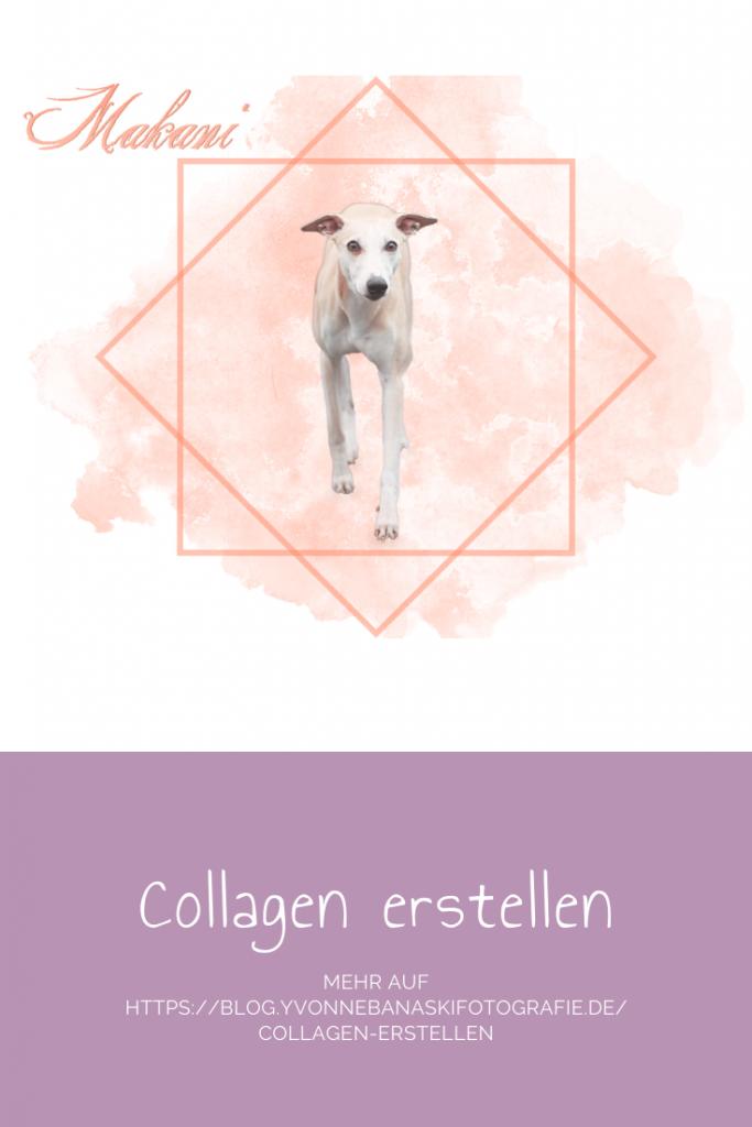 collagen erstellen
